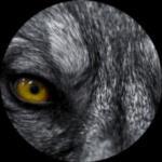 WolfSchiesst's Avatar